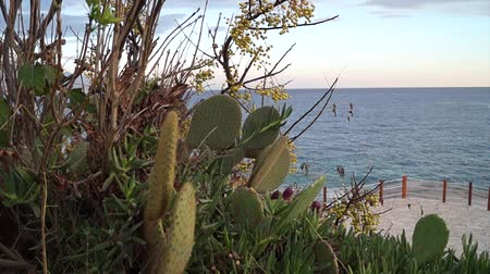 Montenegro, surf, sea, nature, waves, cactus in front of sea, beach, tree