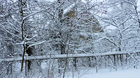 Russian winter. Village house among the trees under the snow
