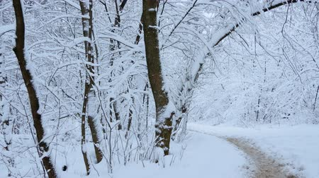 park paths : Russian winter. Winter forest, walking paths among the snow-covered trees