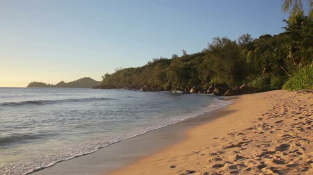 takamaka : died tree on sandy beach at Seychelles Stock Footage