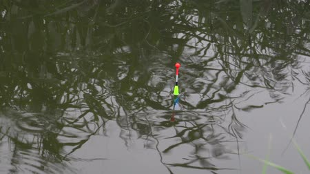 fishing pole : Bright float floating on the river with a bite of fish