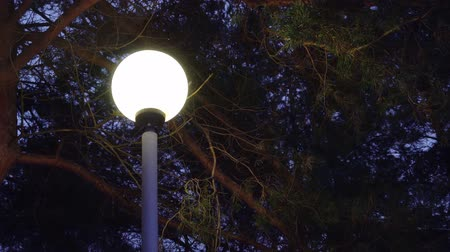 streetlights : street Lamp at night in winter weather on the background of falling snow