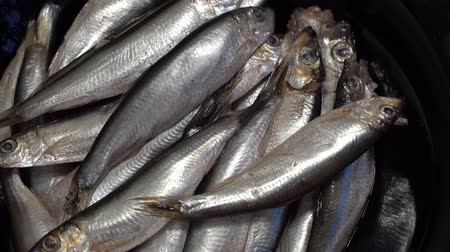 sprats : Marine fish sprat is rotated in the plate. dark key