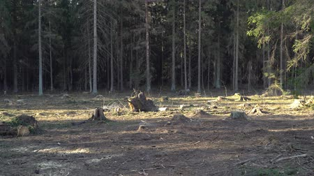 лесное хозяйство : The destruction of nature, deforestation in Europe