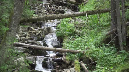 Словакия : landscape mountain stream among the trees