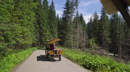 cavalo vapor : Poland Zakopane June 2019. Tatra national Park. Traditional horse-drawn carriage carries tourists on a mountain road Vídeos