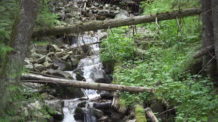 Словакия : zoom in. landscape mountain stream among the trees Стоковые видеозаписи