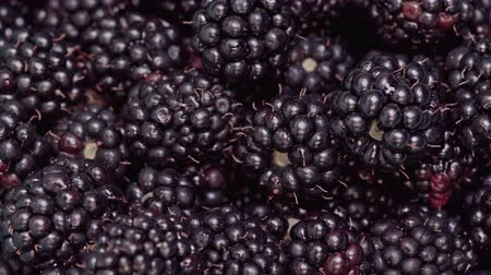 black berry : Rotation of black ripe blackberries close-up