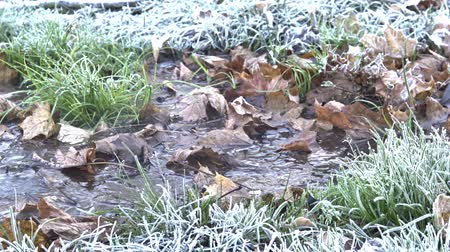frazil ice : Frost on the green grass and steam over the stream close-up. stock video