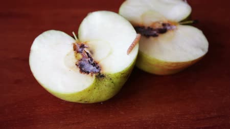 dřeň : Worm Crawls out of the Tainted Apple