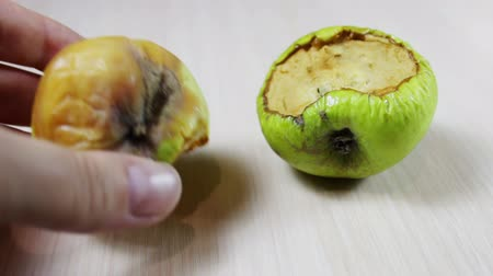 putrefaction : Ugly rotten apple on a white background