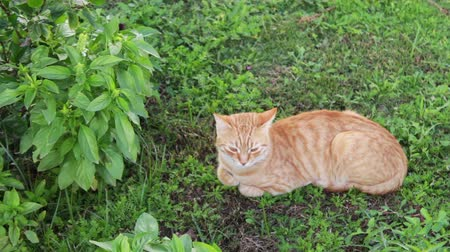be sad : red cat lies on a green grass
