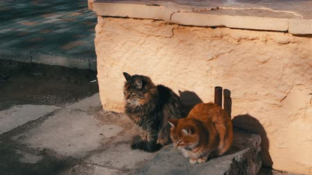 ronronar : Two large stray cat sitting in the winter