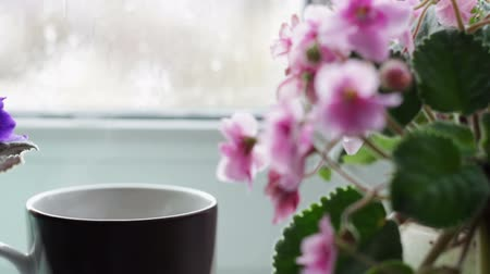 cold : cup of coffee tea hot drink on window sill next to a beautiful home flower in a pot