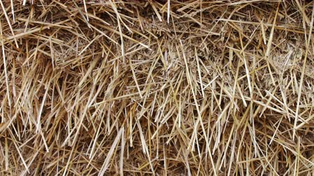 hay pile : Form for farm animals for the winter.Large stack of hay or straw close up view