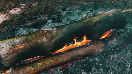 open hearth : A view of the burning large logs that envelop the flames of fire. Bonfire in the nature, tourism and survival