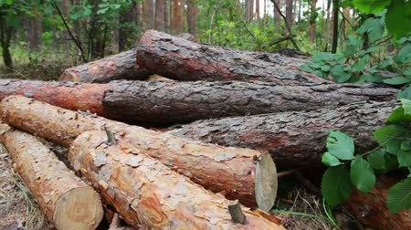 лесоматериалы : Folded trees on the ground.Stump from newly felled tree.Huge logs from felled trees lie in forest on ground. The problem of deforestation. Стоковые видеозаписи