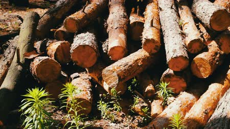 sawn : Lot of felled trunks from trees neatly folded Stock Footage
