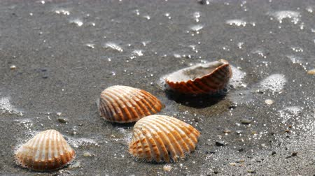 biżuteria : Beautiful relief seashells that wash a wave