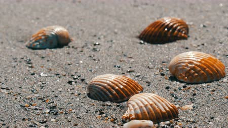 seashell : Waves wash over four different shells on beach and washes them away.