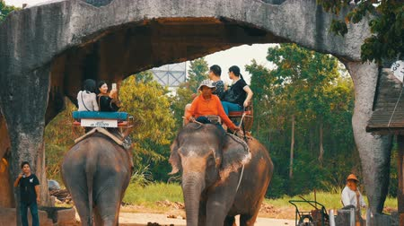 floş : PATTAYA, THAILAND - DECEMBER 26, 2017: Elephants in elephant village. The elephants on which the tourists ride Stok Video
