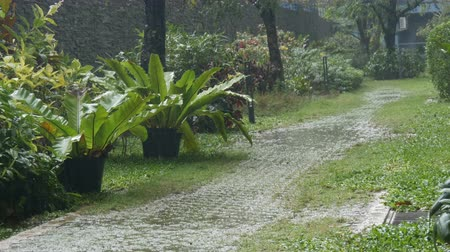 torrential rain : Rain is in a tropical country. Downpour on the street