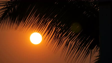 akşam vakti : Great sunset red sun against background of palm leaves