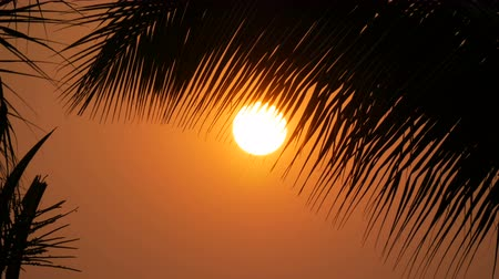 alkony : Great sunset red sun against background of palm leaves