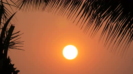 nemli : Stunning beauty of the red sunset of a large sun against the backdrop of palm leaves Stok Video