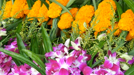 subtropical : Beautiful purple and yellow Thai flowers. Exotic flowers of Asia for offering Buddha