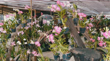 dendrobium : Various beautiful flowers in pots in botanical garden or on a store shelves