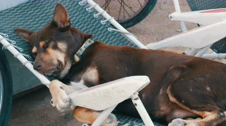handheld shot : Dog funny sleeping in plastic chair on the street