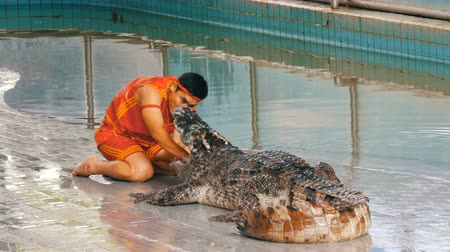 kétéltű : PATTAYA, THAILAND - DECEMBER 30, 2017: Animal trainer makes a show with crocodiles. Crocodile farm Pattaya, Thailand. Stock mozgókép