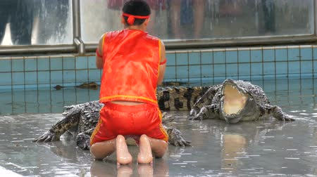 wrestler : PATTAYA, THAILAND - DECEMBER 30, 2017: Show with crocodiles. The trainer shows performance with crocodiles Stock Footage