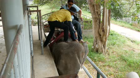 elefant : PATTAYA, THAILAND - DECEMBER 30, 2017: Tourists sit on a back of an Indian elephant