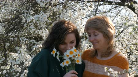 camera move : Portrait of adult middle-aged mother and her adult daughter who inhale smell the scent of flowers of daffodils for Mothers Day against the background of a flowering tree