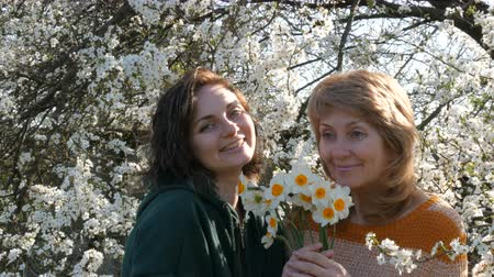 żonkile : Portrait of adult middle-aged mother and her adult daughter who inhale smell the scent of flowers of daffodils for Mothers Day against the background of a flowering tree