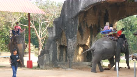 tusk : PATTAYA, THAILAND - DECEMBER 25, 2017: Elephant Village. Different elephants on their back drive tourists.