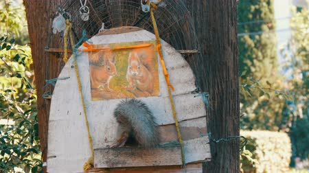 drápy : The squirrel comes into the house for portion of food with nuts Dostupné videozáznamy