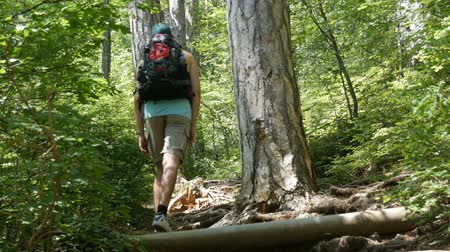 leafs : Young tourist man comes with backpack on his back up a mountain path through the forest