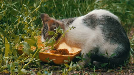 бездомный : Little Hungry Kitten Eats in a Green Grass