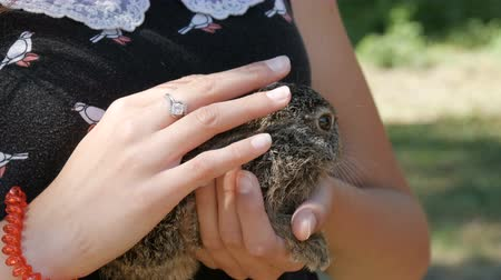 gato selvagem : Girl is holding a small wild hare in her hands