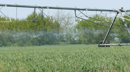 орошение : Large watering or sprinkler irrigation stand in field and water young plants