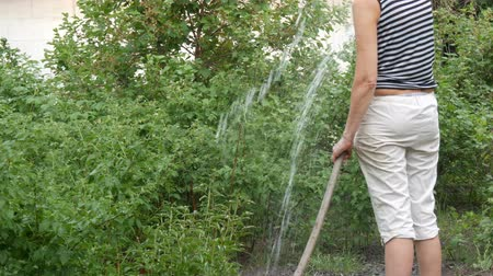 стручковый перец : Woman is watering plants in her garden from a hose