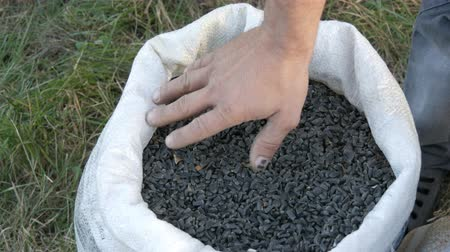 kabuksuz tahıl : Mens hands of a farmer touching a crop of sunflower seeds. Harvest of sunflower seeds. Sunflower seeds in large white bag close up view Stok Video