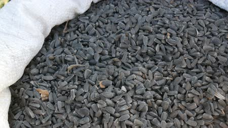 kabuksuz tahıl : Harvest of sunflower seeds. Sunflower seeds in large white bag close up view