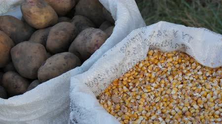 oat flakes : Autumn harvest. Bag of potatoes and corn seeds