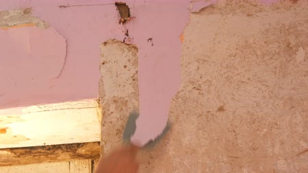 soyulması : Decrepit pink wallpaper on a wall, home repair. Man peeling old wallpaper with special spatula. Stok Video