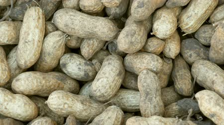 ореховая скорлупа : Peanut harvest close up view. Freshly harvested peanuts from the ground in shell.
