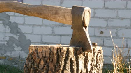 топор : Large village ax sticking in tree stump